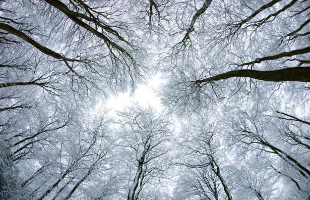 Symphony of Soil Trees in Snow